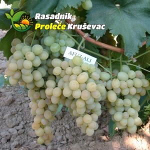 kalemovi vinove loze stone sorte afus ali