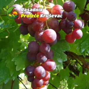 kalemovi vinove loze stone sorte kardinal