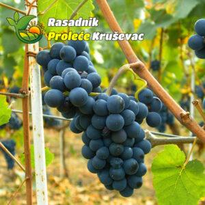 kalemovi vinove loze stone sorte moldova