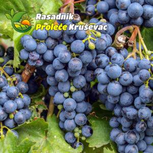 kalemovi vinove loze stone sorte rubel