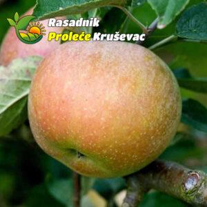sadnice jabuke stare sorte budimka
