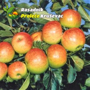 sadnice jabuke stare sorte kolacara