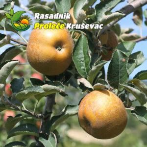 sadnice jabuke stare sorte kozara