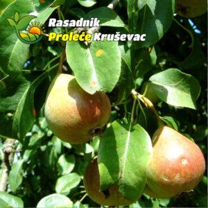 sadnice kruske lubenicarka