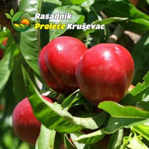 sadnice nektarine kaldezi