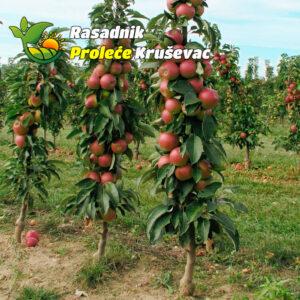 sadnica stubaste jabuke crvena