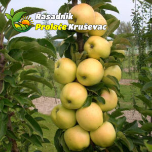zelena stubasta jabuka